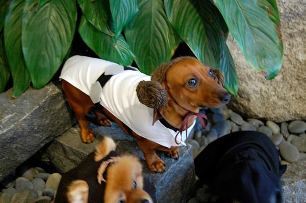 5 Easy DIY Pet Costumes for Halloween