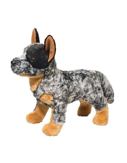 Australian Cattle Dog Good And Bad