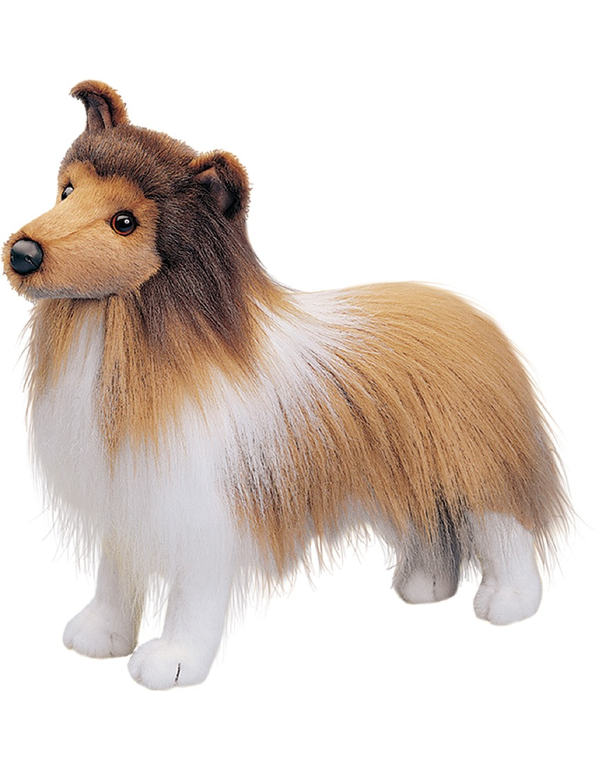 Dixie Sheltie