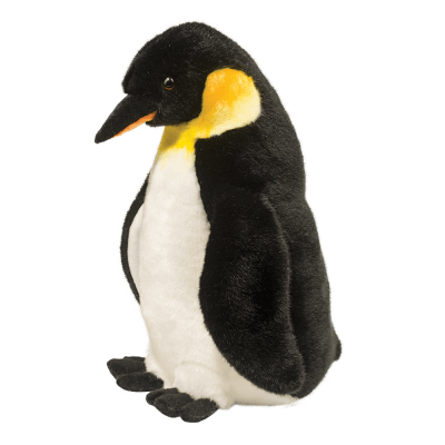 Weddell Penguin