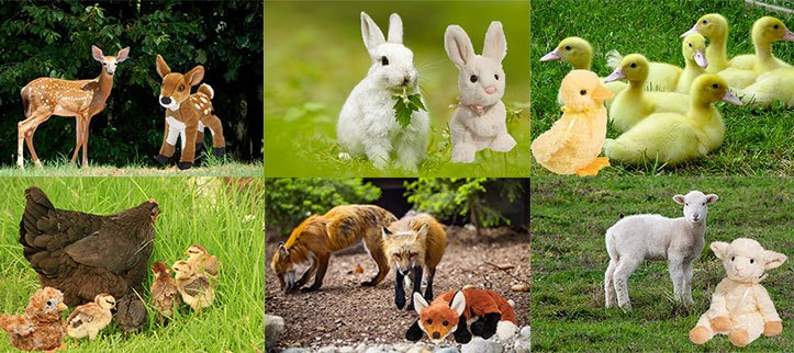 Cuddly Spring Animals