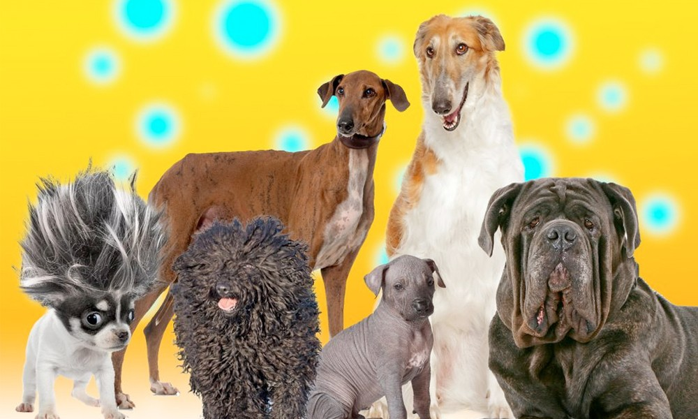 New Douglas Dog Breeds