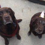 Duncan & Grace Dogs