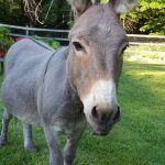 Elwood the Donkey