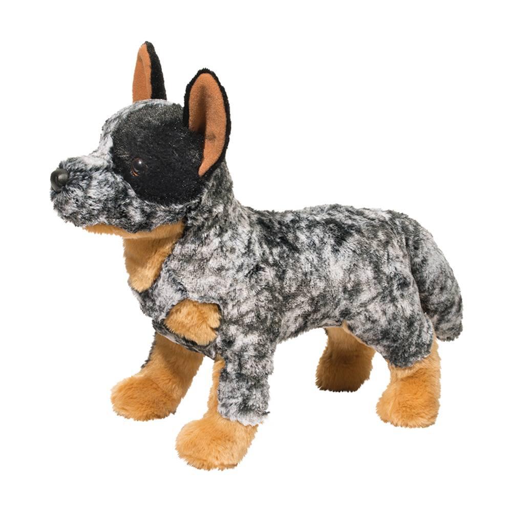 Bolt Australian Cattle Dog