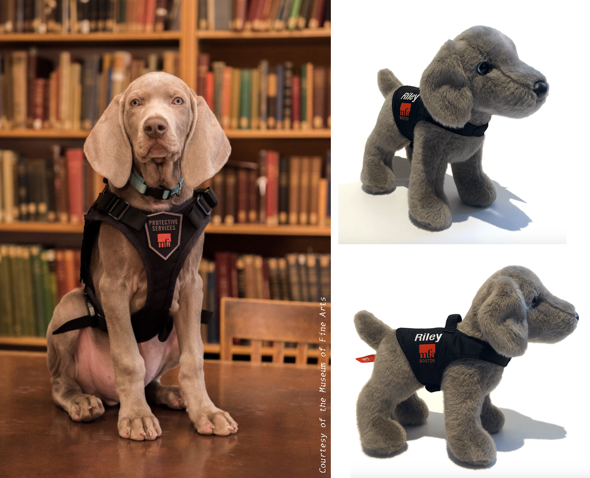 A photo of the real Riley the Weimaraner puppy, pest detection dog for the Boston Museum of Fine Arts and two small photos of the Riley portrait plush by Douglas Cuddle Toys, a special museum exclusive.
